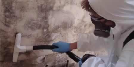 Mold Removal